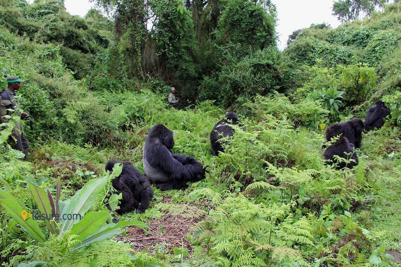 Rwanda jhl