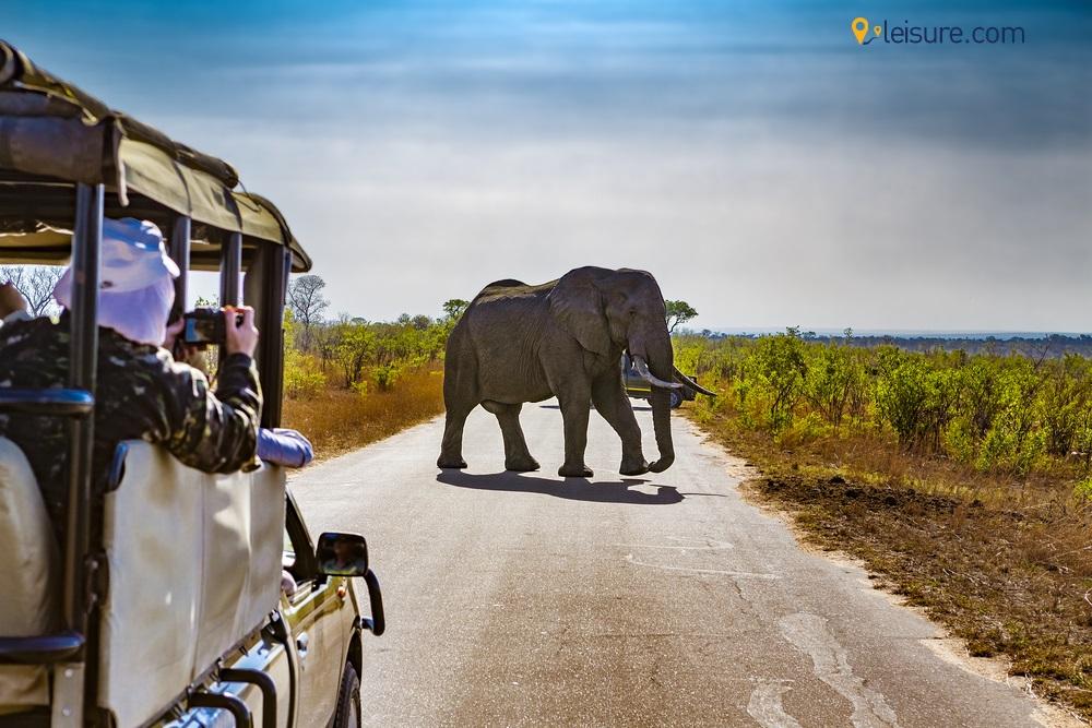 Best Safari Destinations in South Africa
