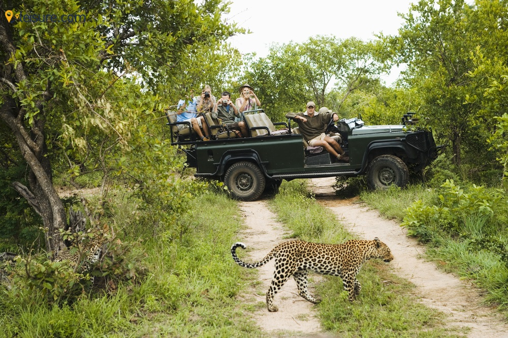 Best Safari Destinations