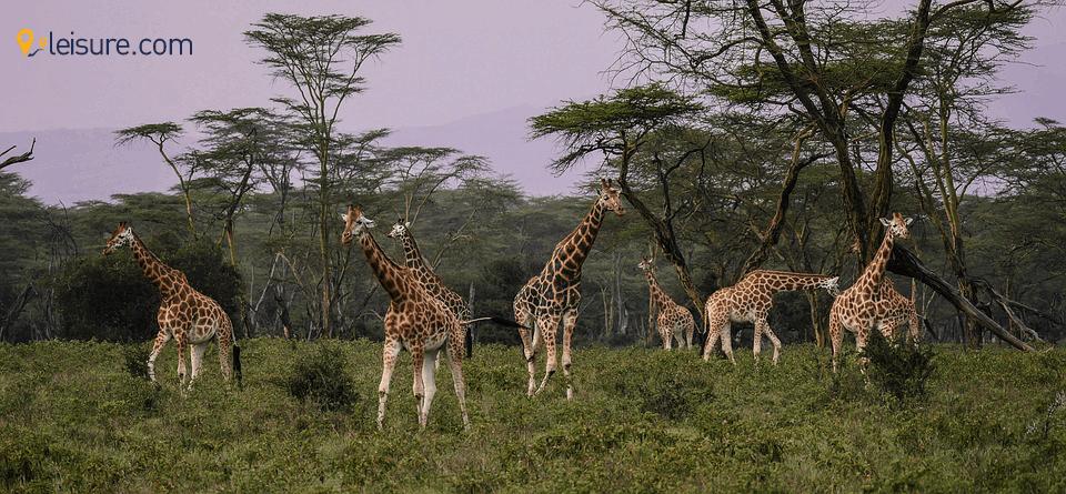 safari trip kj