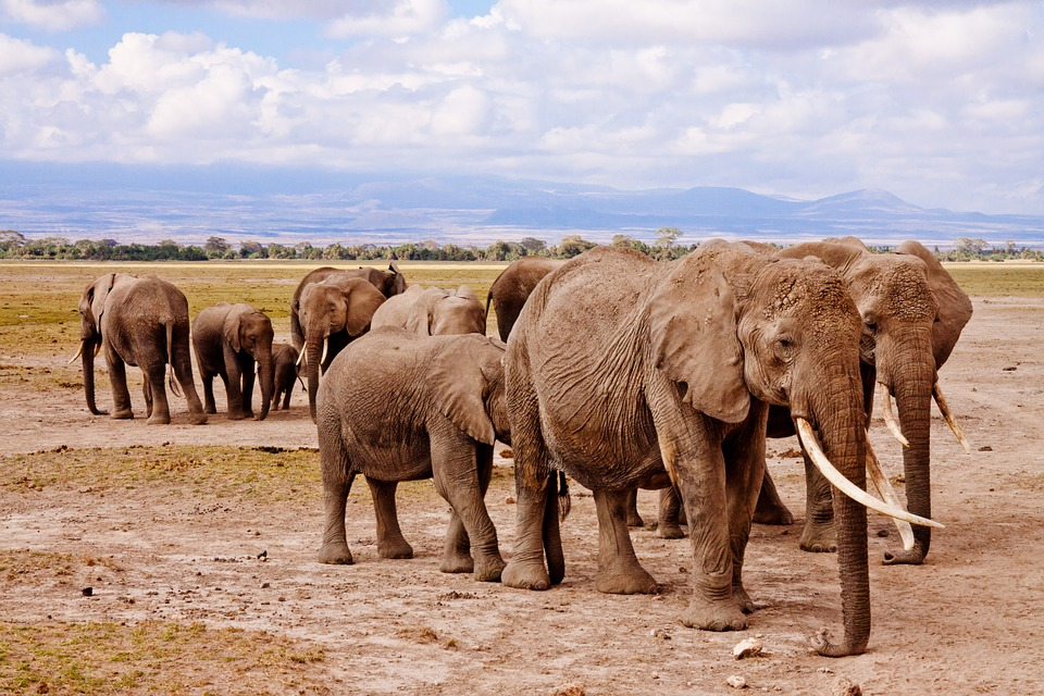 A Memorable Experience With African Safari