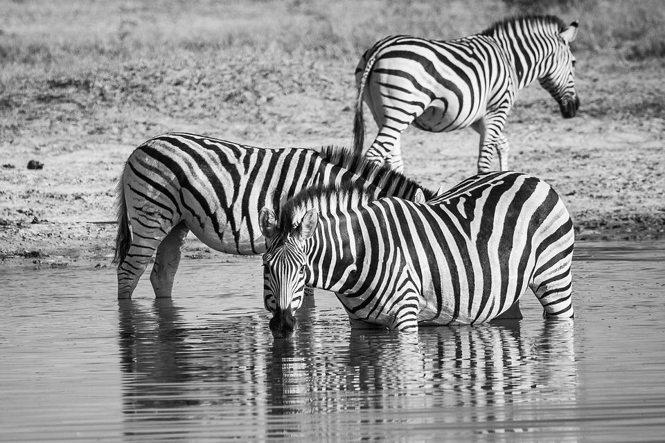 South Africa safari g