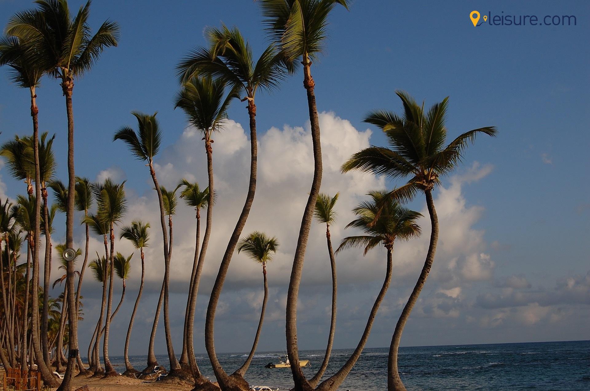 punta cana palms hotels